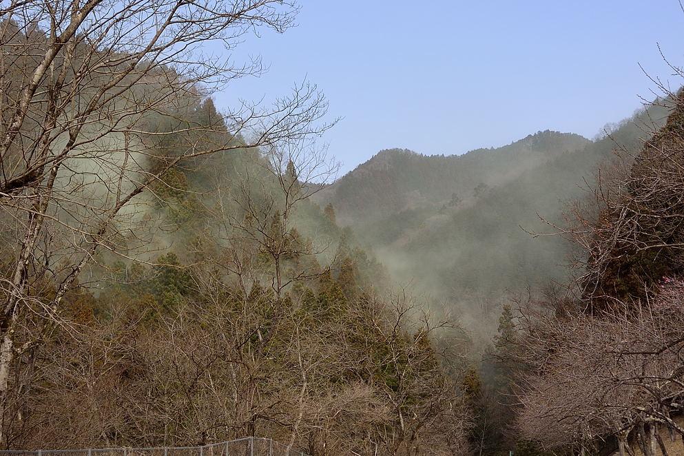 09:11 スギ花粉の飛散