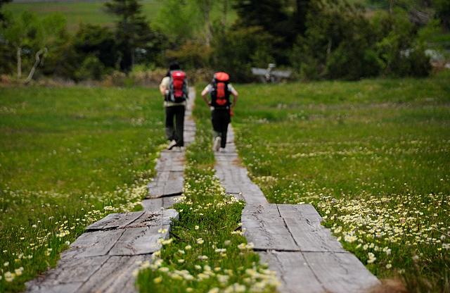 チングルマのお花畑を行く木道は、ナデッ窪へ続きます。