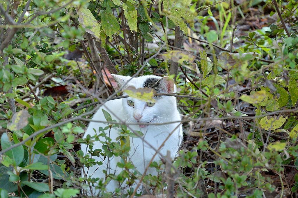 先日、木の上にいた猫(♂)