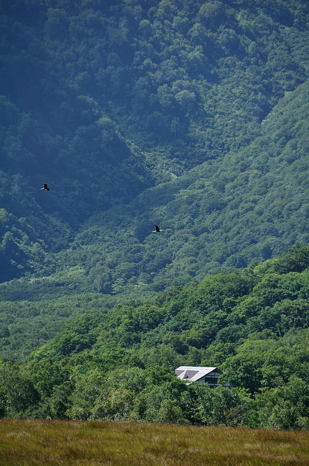 東電小屋上空を飛ぶ鳶