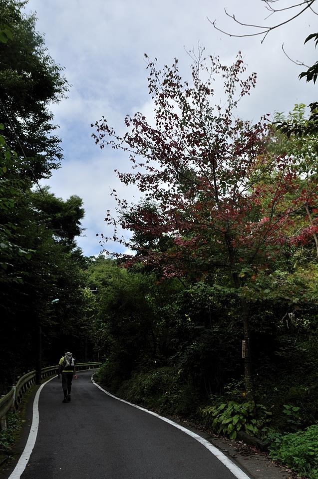 木々の紅葉が始まっています