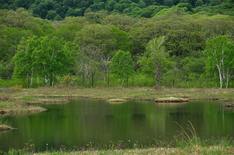 池塘に映える新緑