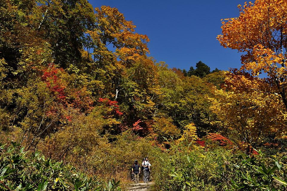岩清水の黄葉