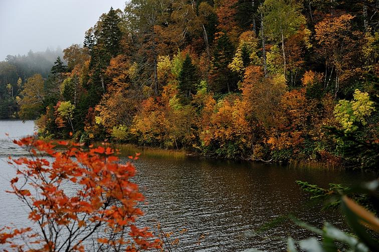 尾瀬沼南岸沿いの紅葉