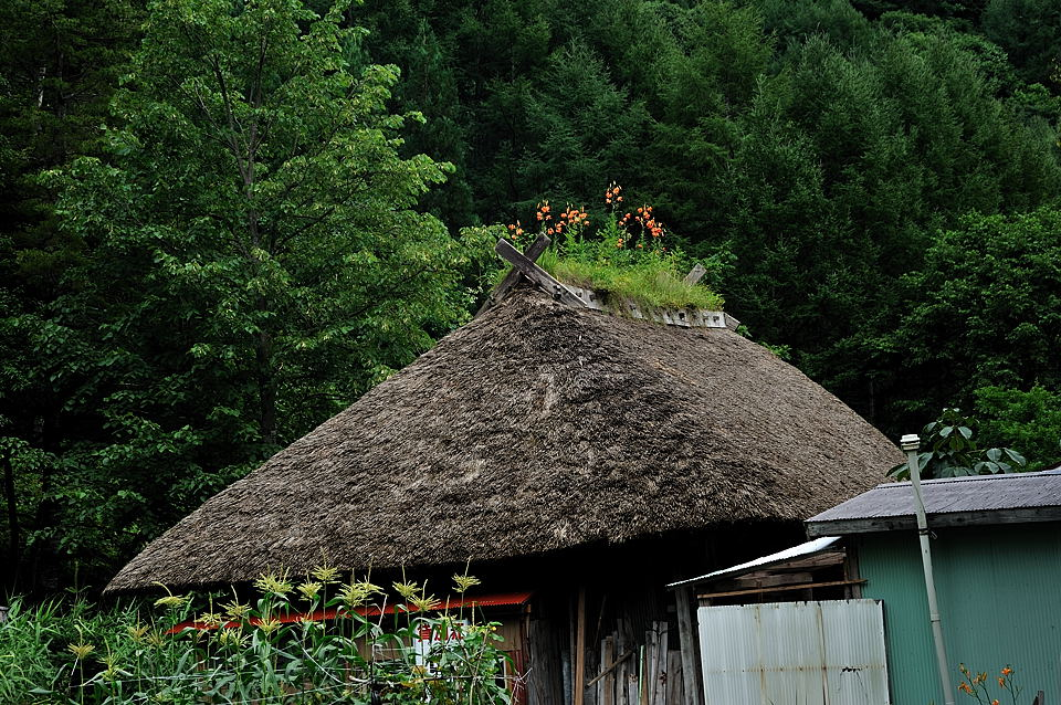 かやぶき屋根に咲くクルマユリ