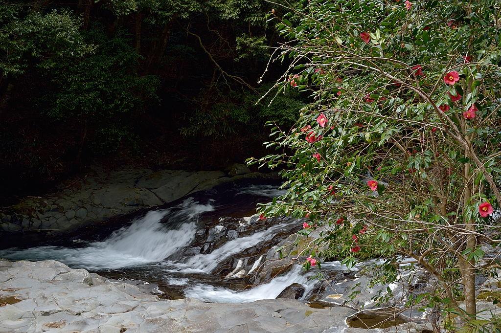 14:34 椿と小さな滝