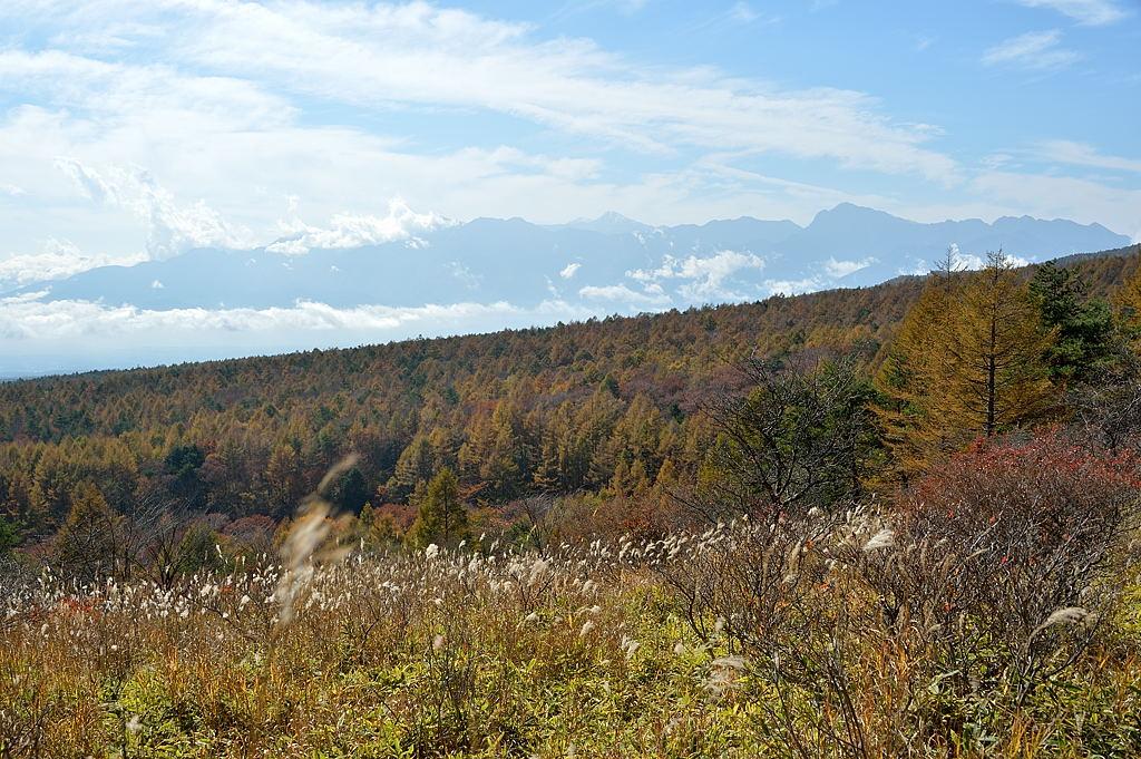 南アルプス方面の山々と落葉松林