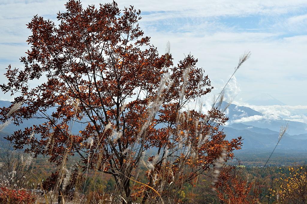 紅葉の樹と霞む富士山