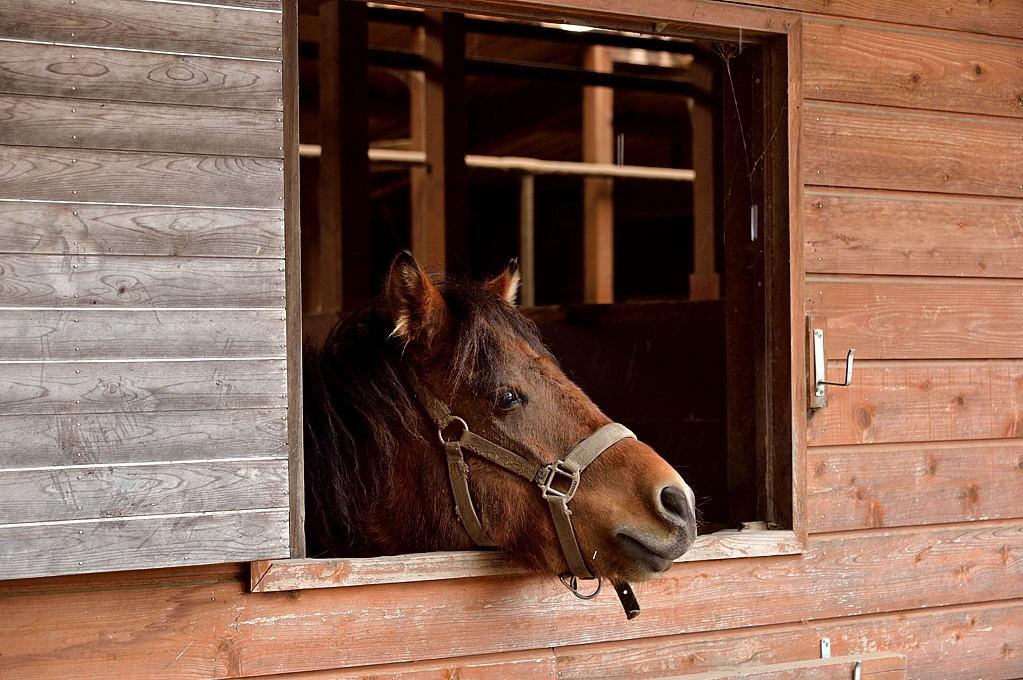 人懐こい木曽馬