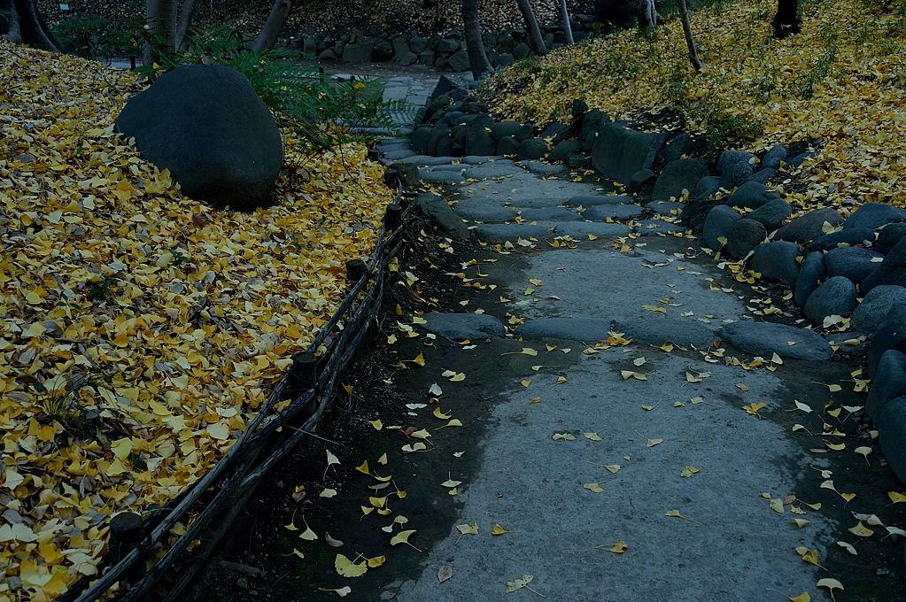 落葉の下り坂