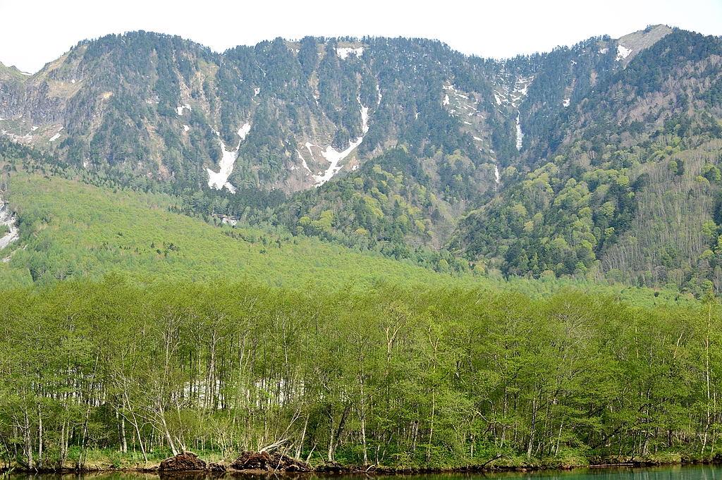【07:58】木々の新緑の見事なグラデーション