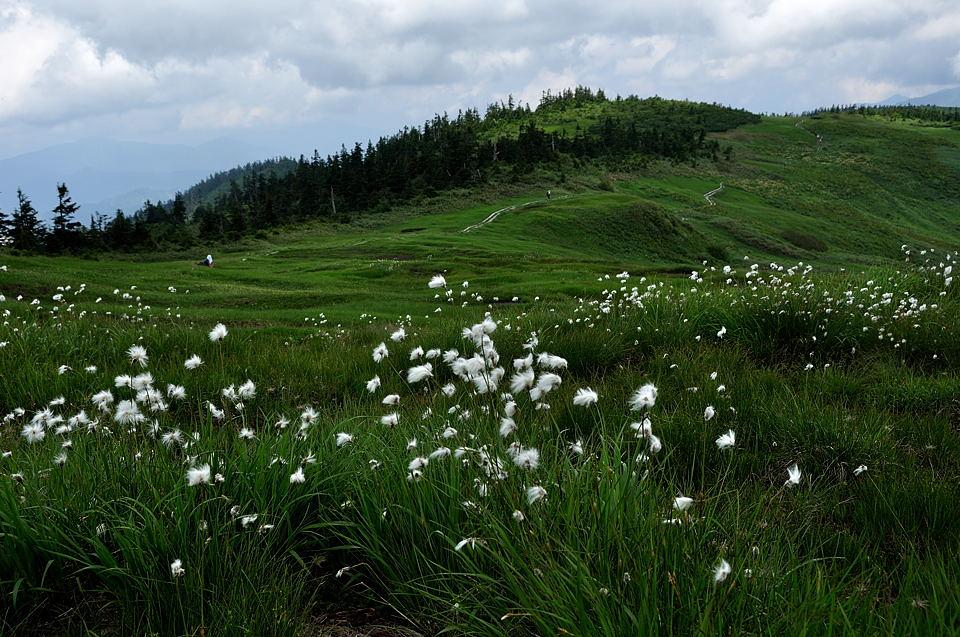 中門岳への道