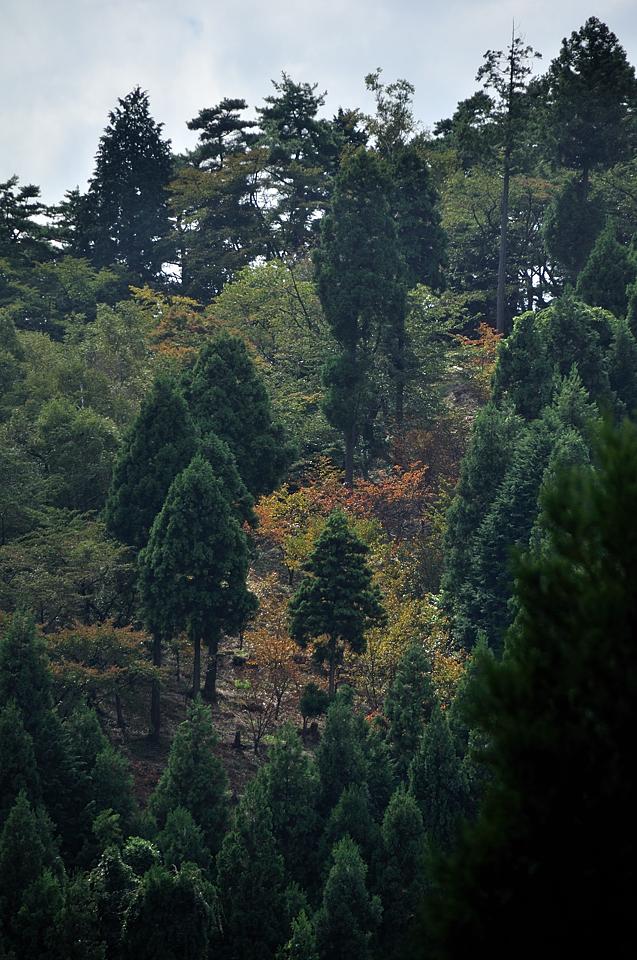 日影沢林道から見た一丁平