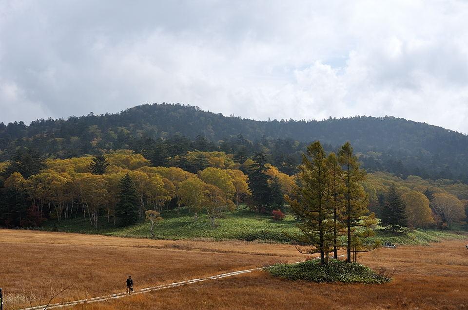 カンバの丘の黄葉