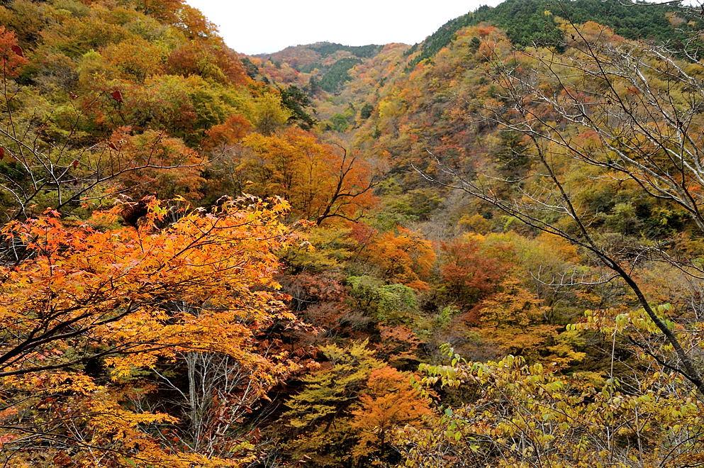 渓谷の紅葉