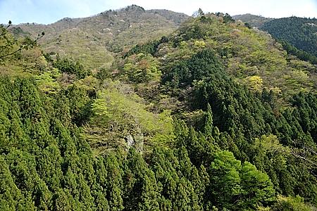 川苔谷の新緑