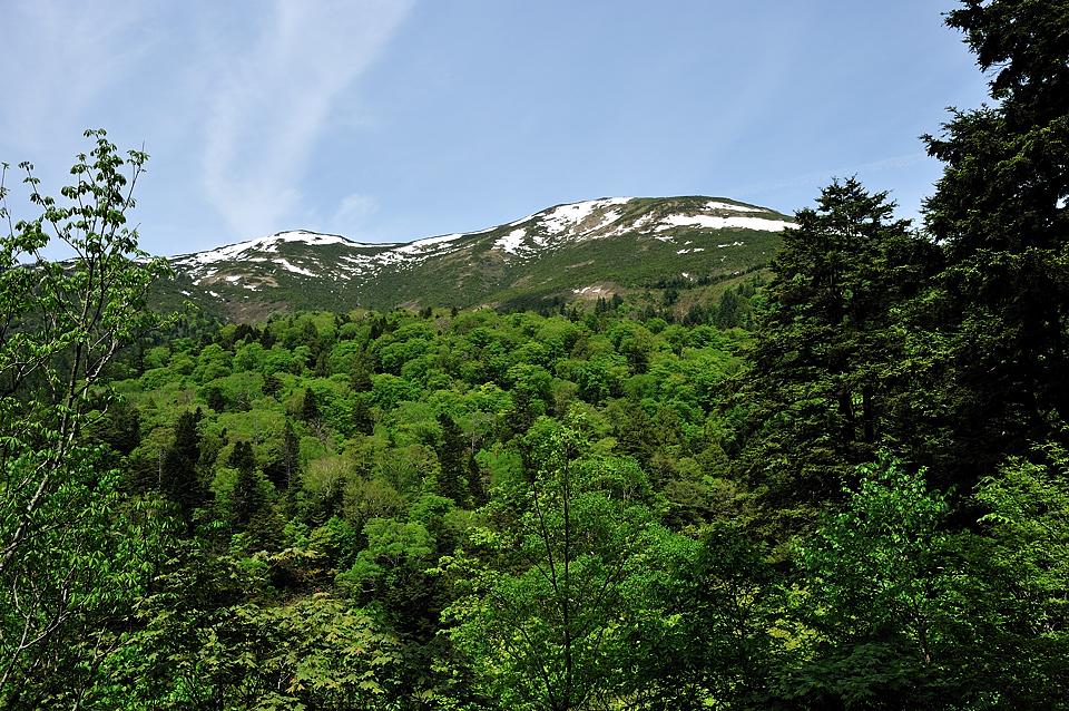 至仏山麓の新緑