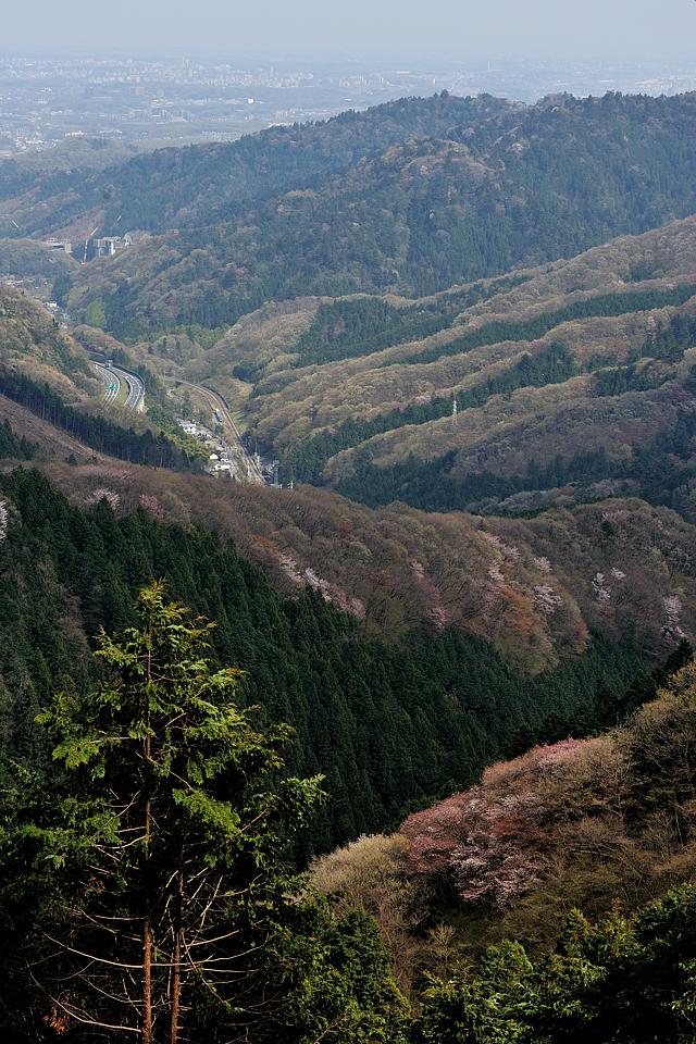 景信山の下り口から高尾山方向