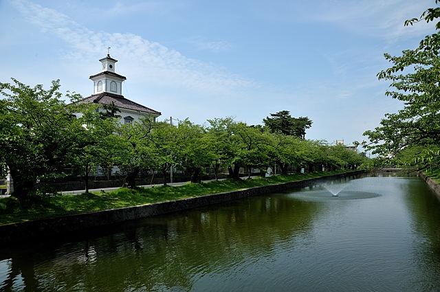 鶴岡公園の桜並木