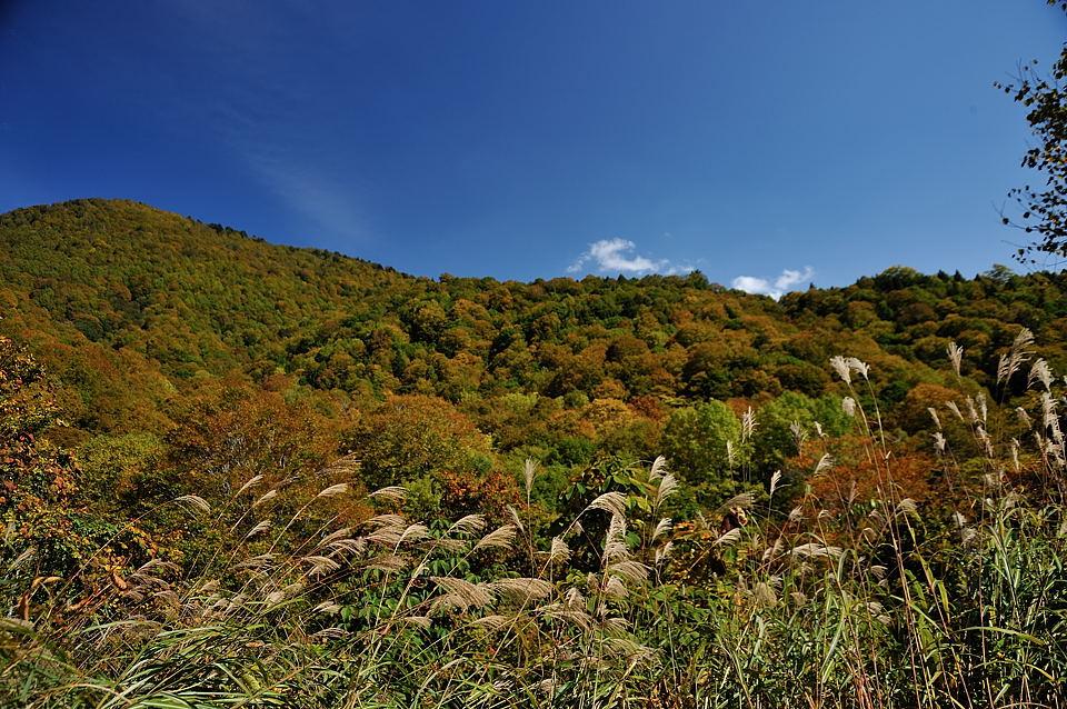 一ノ瀬までの登山道沿い