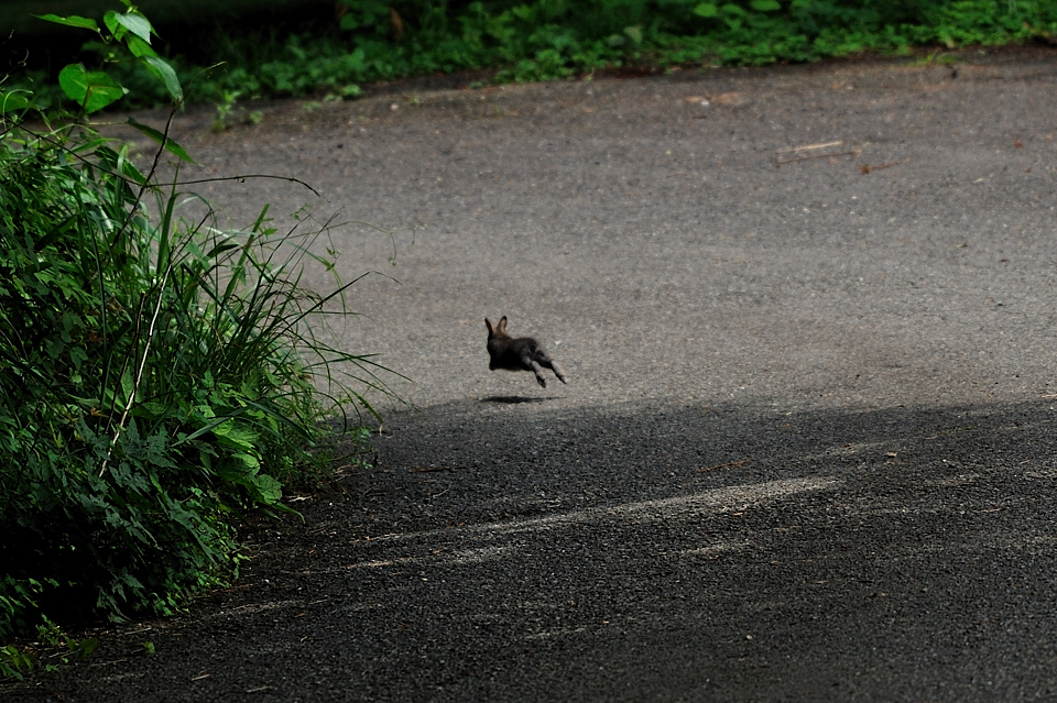 逃げて行くウサギ