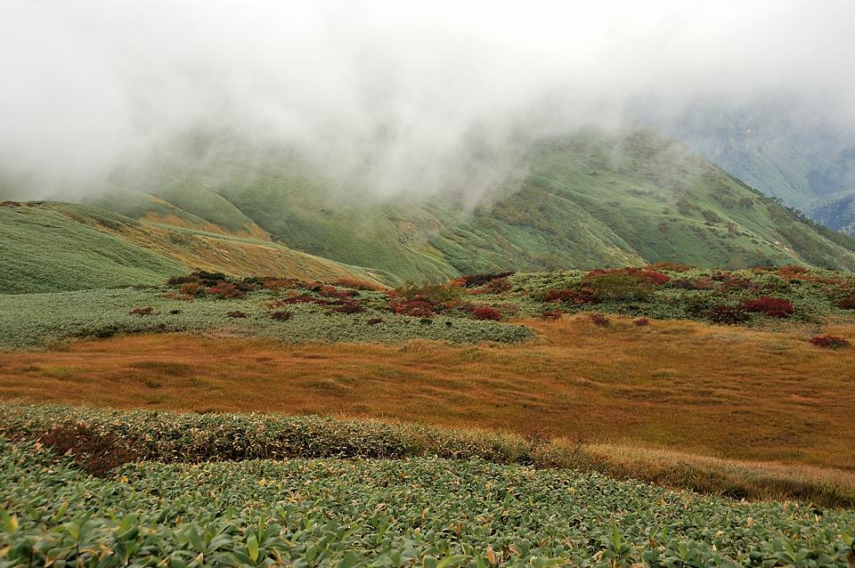 湿原の草紅葉