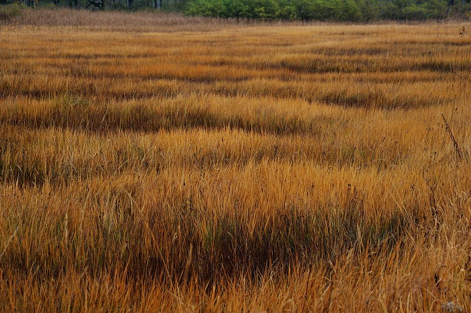 湿原のケルミとシュレンケ