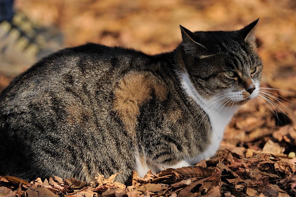 城山でハイカーに可愛がられている猫