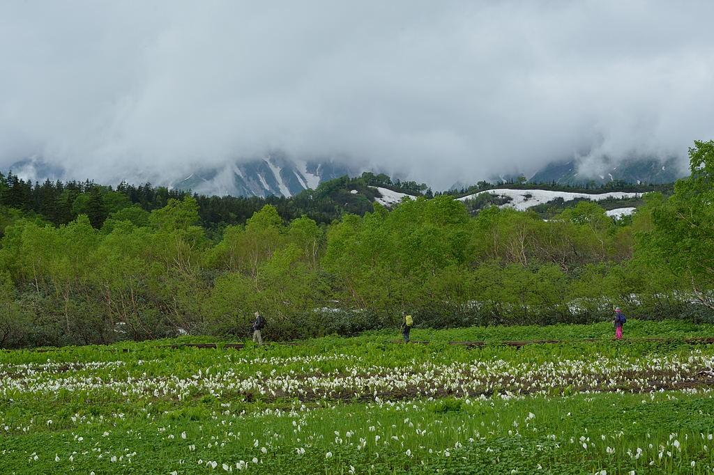 水芭蕉湿原からの白馬三山