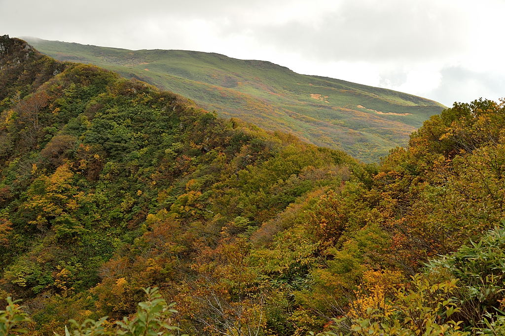 斜面の木々の黄葉