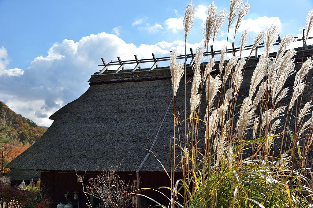 ススキと茅葺屋根