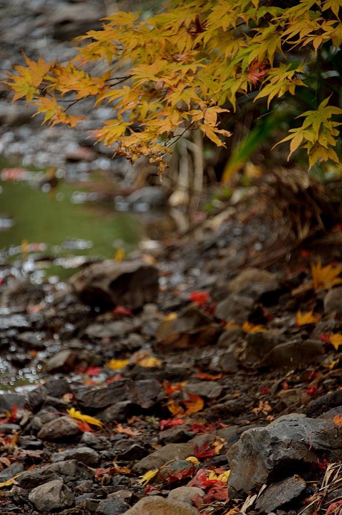 黄葉と紅い落葉